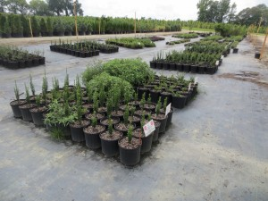 Cover photo for February 13, 2018 Eastern NC Nursery Conference Registration Available Now