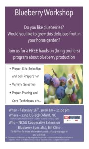 Cover photo for Blueberry Workshop