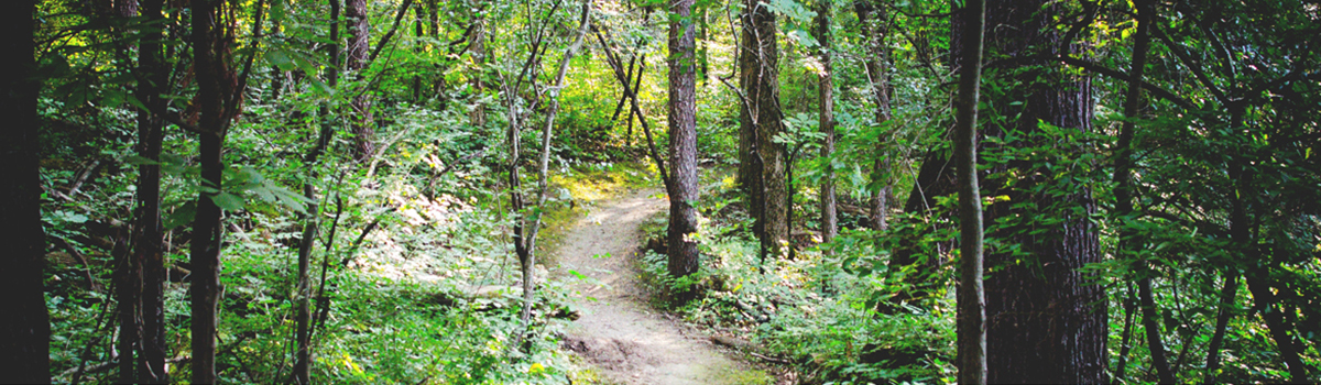 Image of wooded path